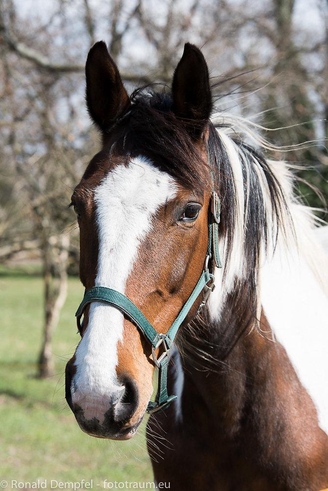 Pferd-003.jpg