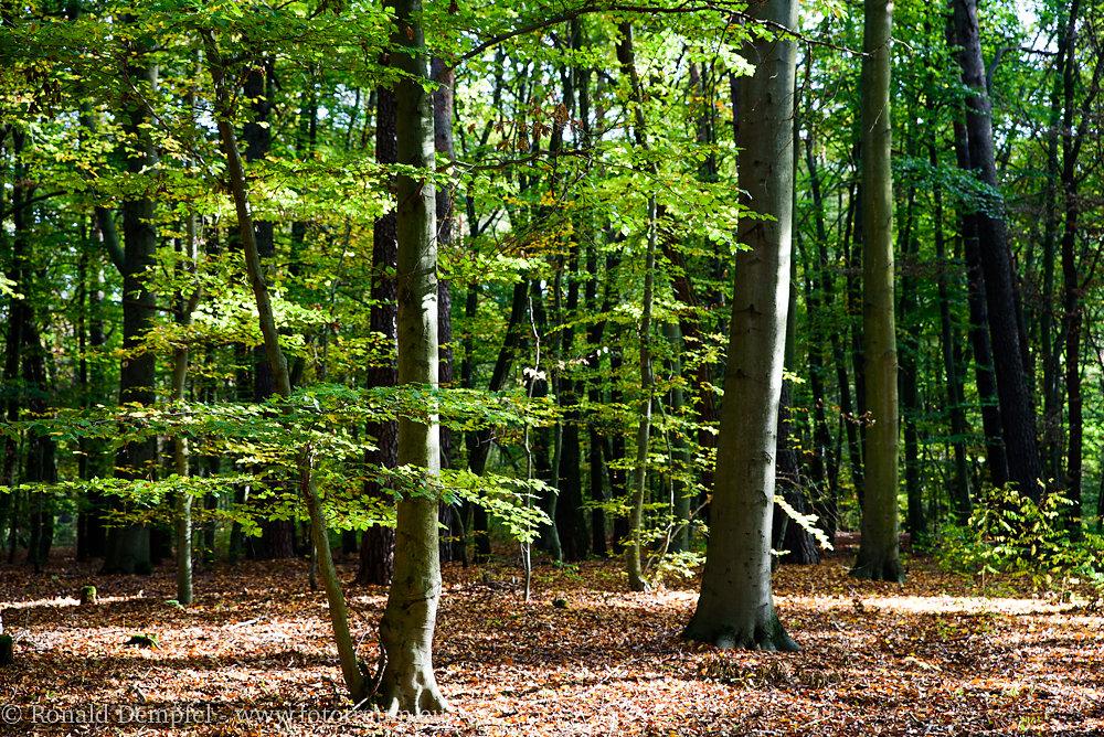 Herbstpark.jpg